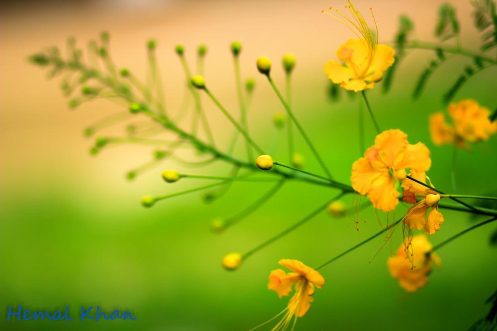 Photo in Nature #yellow #green #bud #nice #lookative #hemaal #khan photos