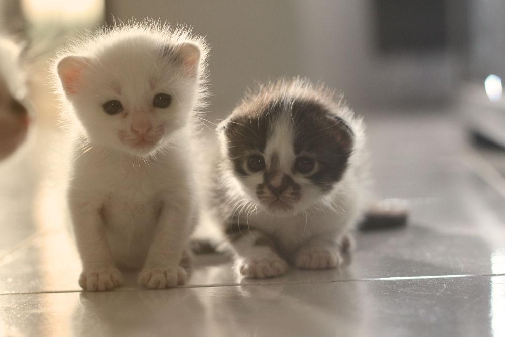 Photo in Animal #cat #kitten #tiger #newborn #baby #little #black and white #pose #kucing