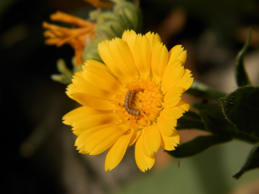 Photo in Macro #flower #macro