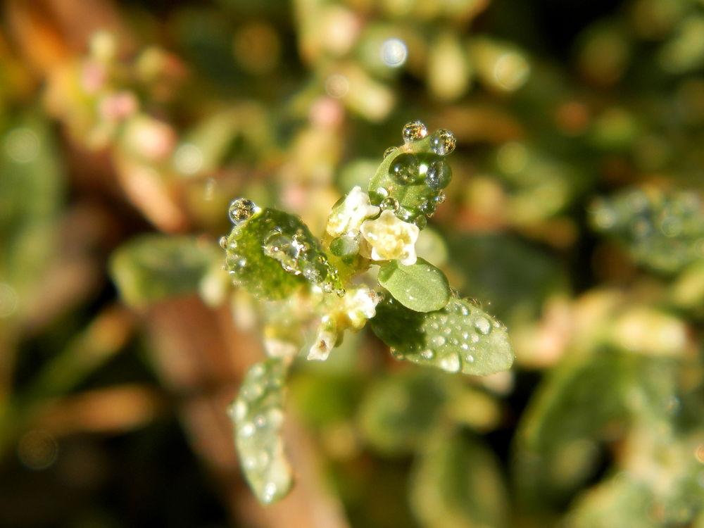 Photo in Macro #water #drops #macro