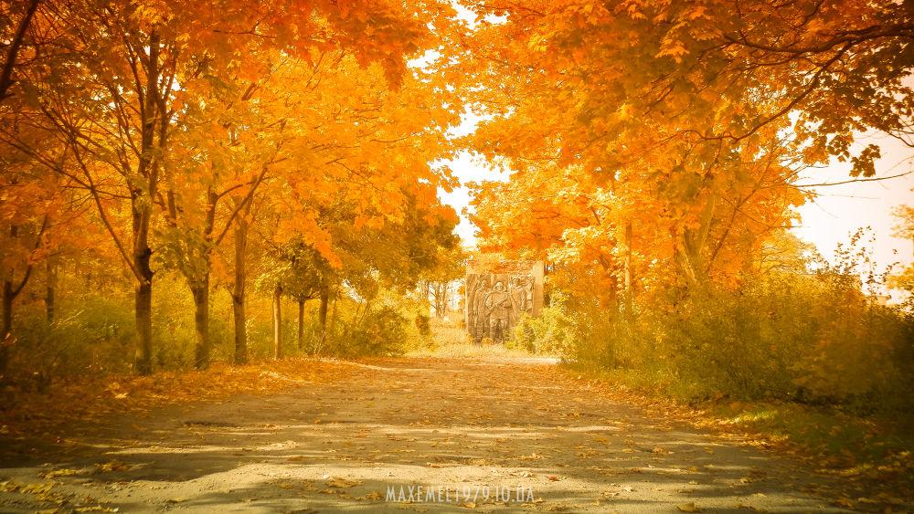 Photo in Landscape #autum #nature