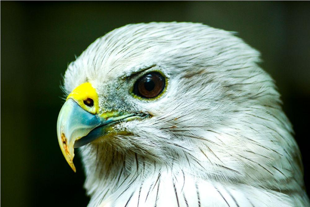 Photo in Animal #eric