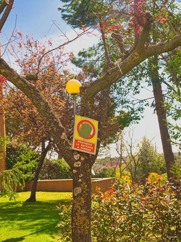 Photo in Still Life #árboles #arbustos #flores #farola #cartel #jardín #exterior #ciudad