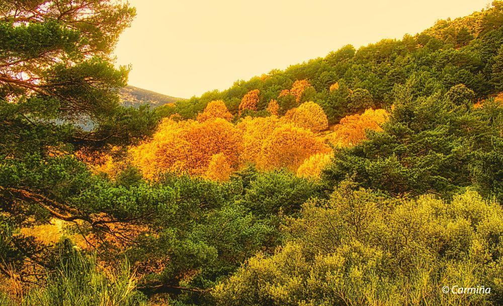 Photo in Random #árboles #otoño #montaña