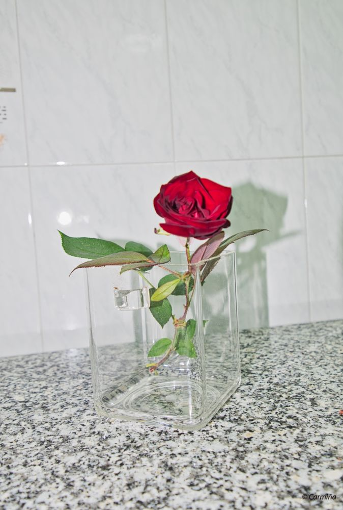 Photo in Nature #rosa #agua #interior #naturaleza