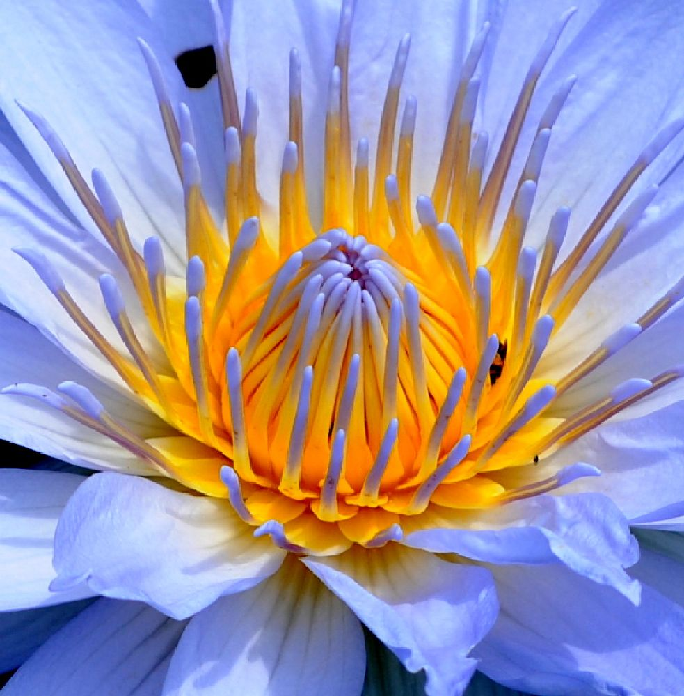 Photo in Nature #botanical #gardens #flowers