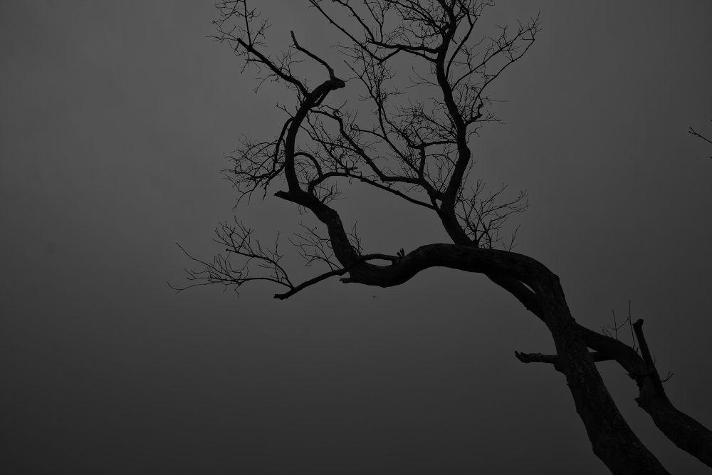 Photo in Black and White #tree top #bayan mutiara #black and white #malaysia