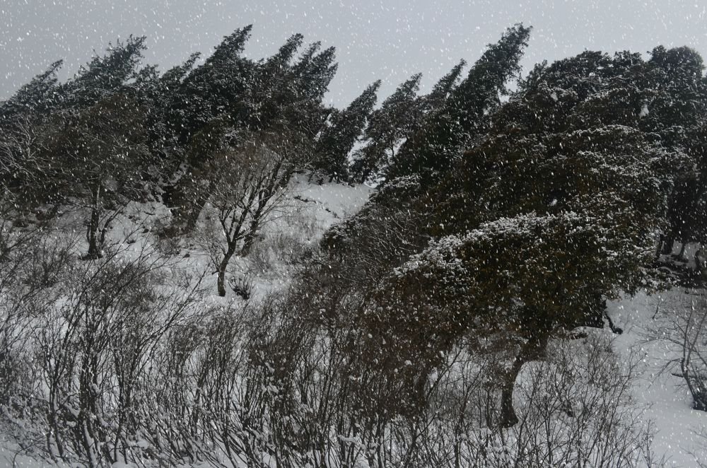 Photo in Nature #winds #hills #snow tree