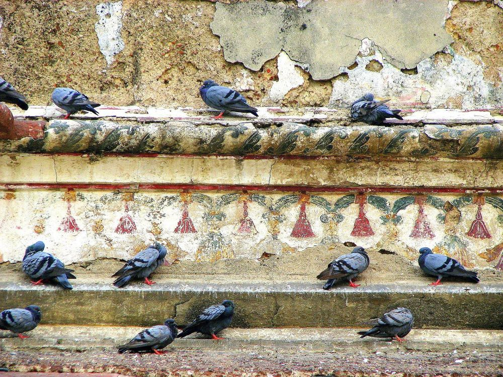 Photo in Street Photography #pigeon #wall