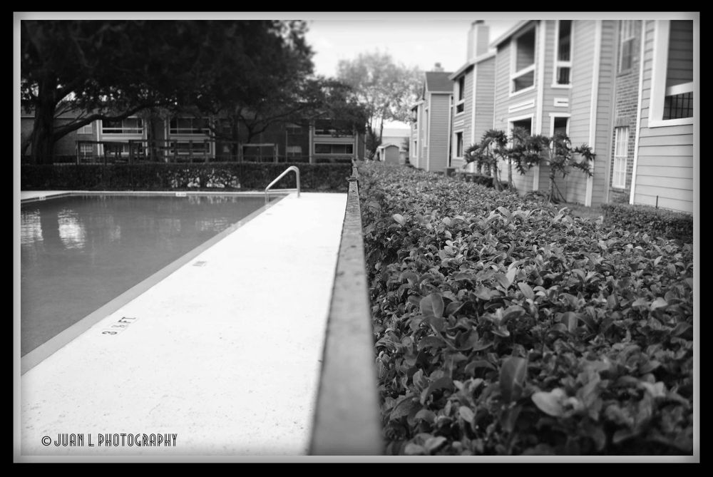Photo in Black and White #line #black and white #pool side #grass #shrubs