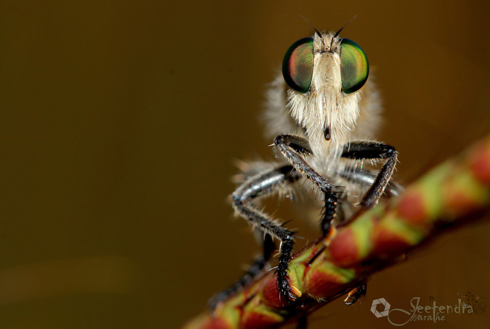 Photo in Nature #insects #macro #nature