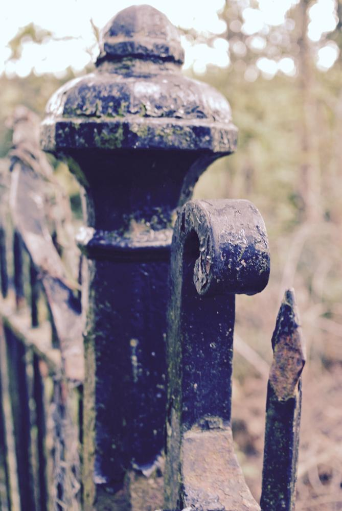 Photo in Street Photography #gates #old #wrought iron
