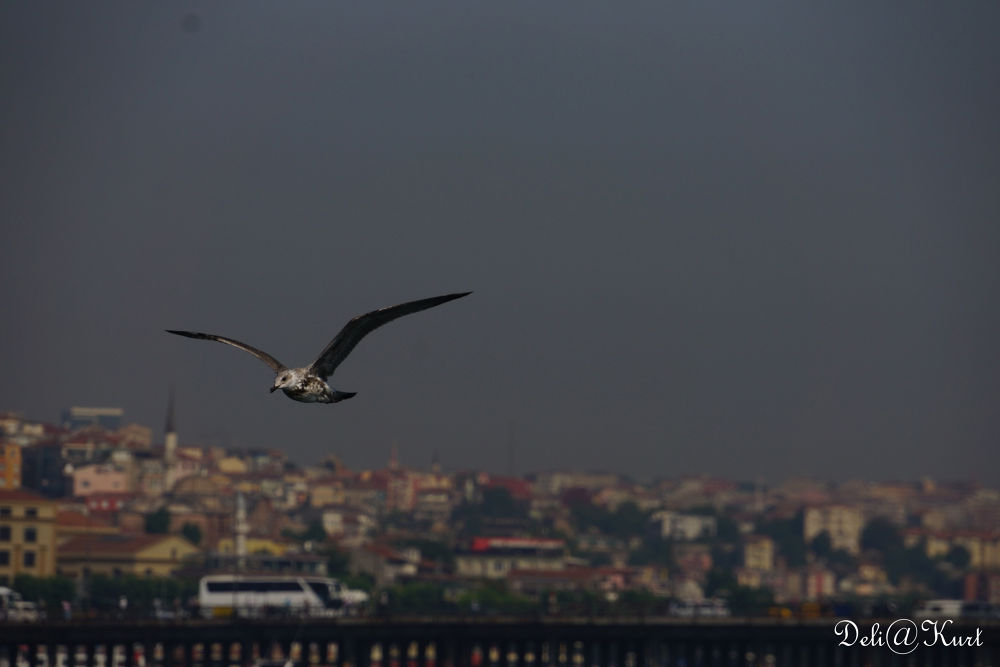 Photo in Random #ah istanbul #istanbul #özgürlük #ypa2013