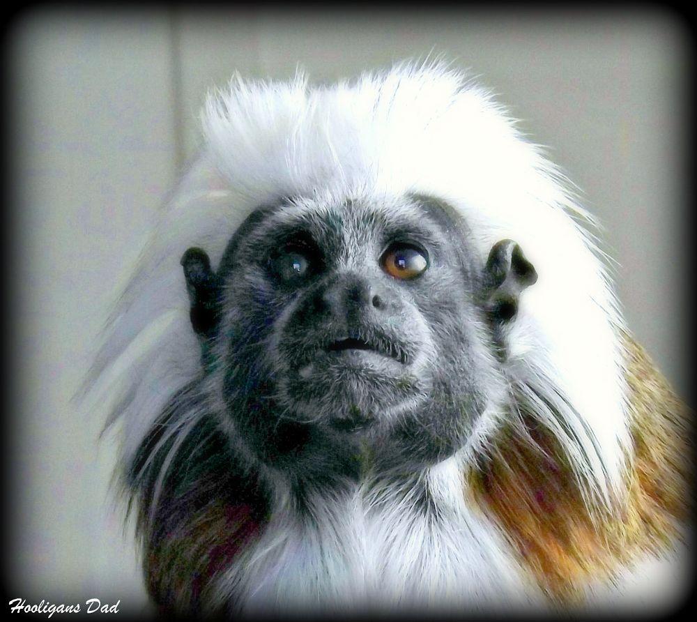 Photo in Animal #monkey #zoo #animal