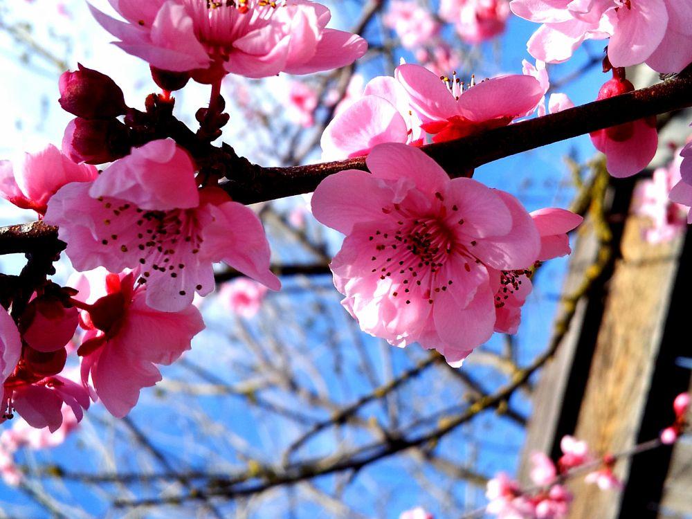 Photo in Random #spring #contest