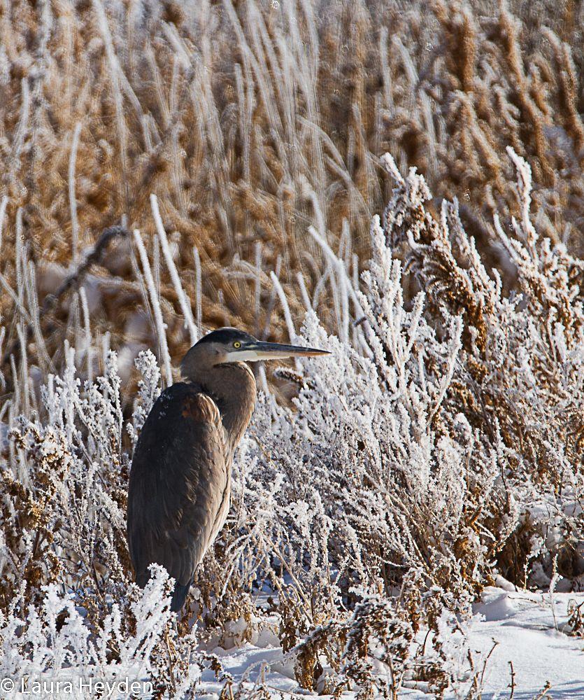 Photo in Animal #herring #oregon #tamron 150-600mm