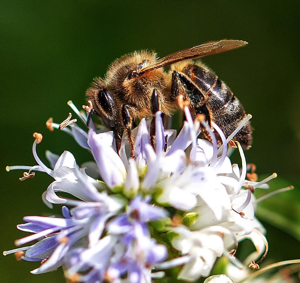 Photo in Nature #closeup #macro #bee #nature #wing #detail