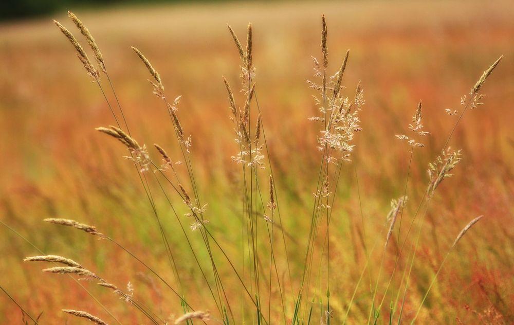 Photo in Nature #grass #de bilt #summer