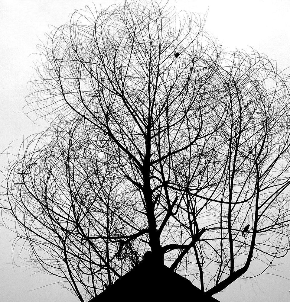 Photo in Nature #av