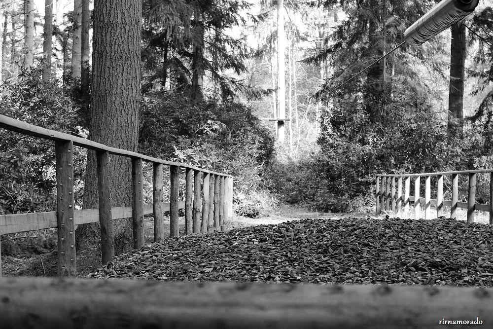 Photo in Random #park #nature #uk #blackandwhite
