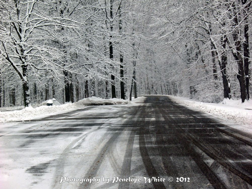 Photo in Landscape #winter #snowscape #bradley woods #trees #black and white #road