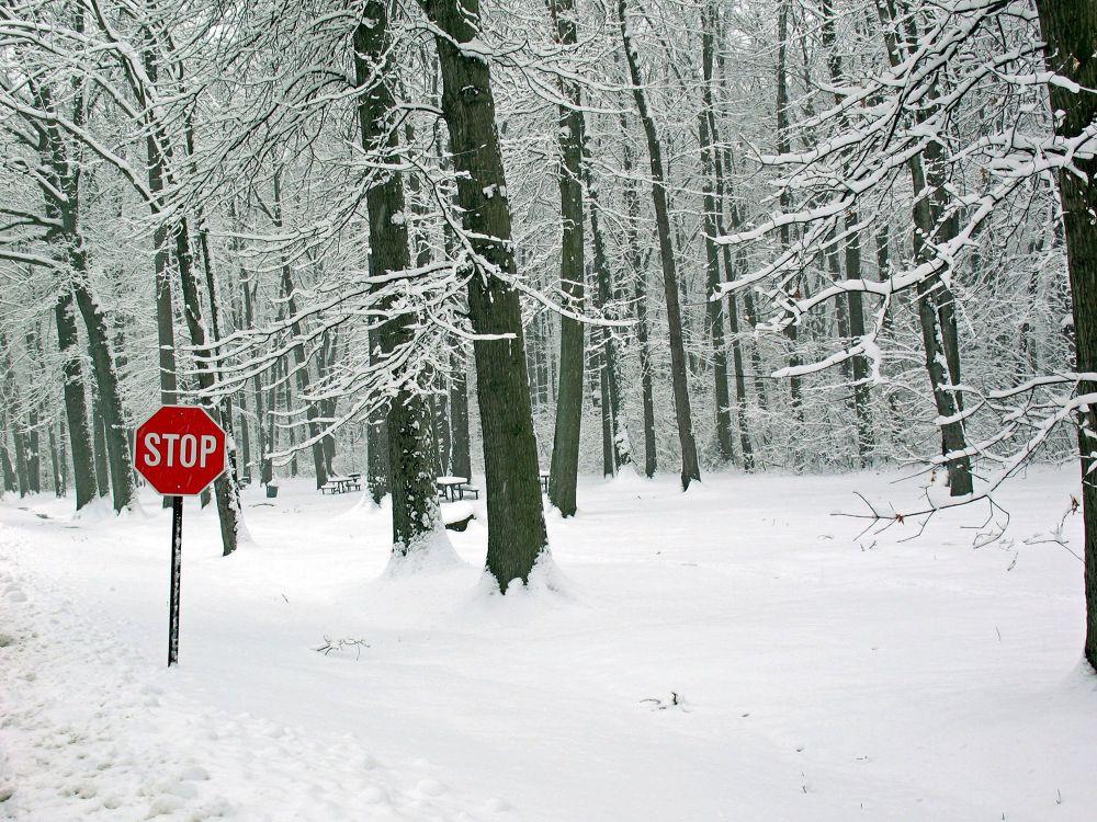 Photo in Landscape #winter #snow #trees #bradley woods #cleveland metroparks #westlake oh