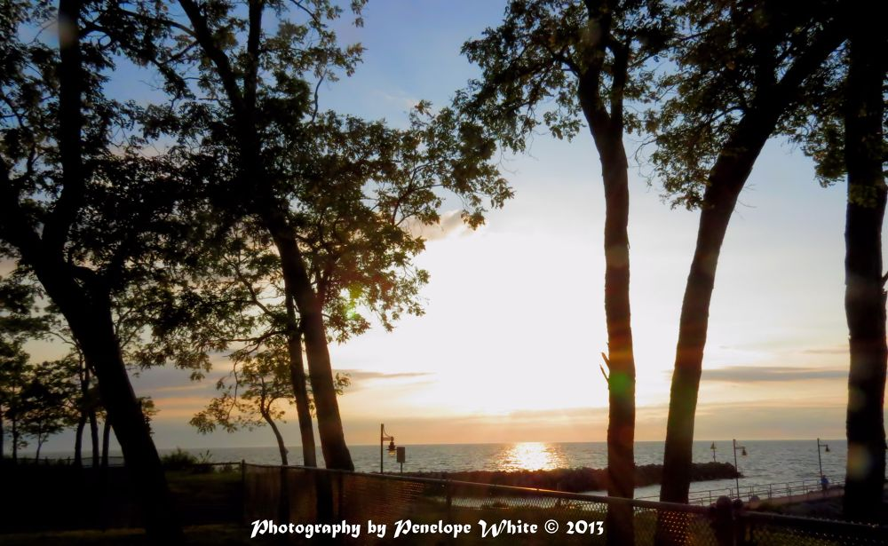 Photo in Landscape #sunset #trees #silhouettes #miller road park #avon lake oh #summer #lake erie