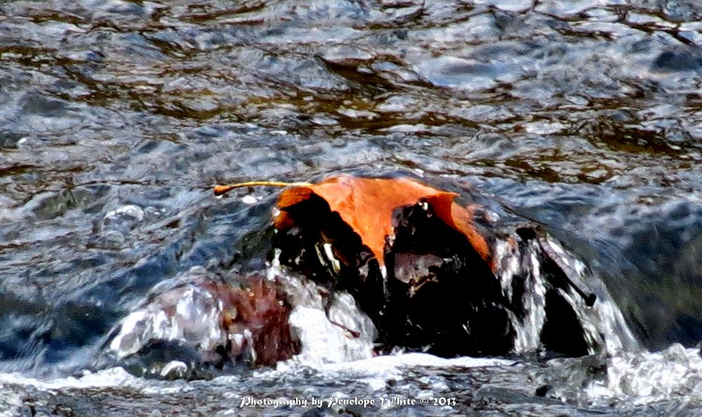 Photo in Nature #rocky river #cleveland metroparks