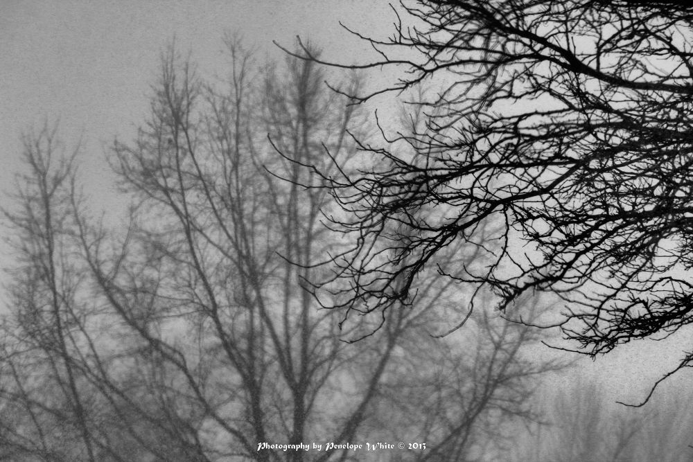 Photo in Black and White #black and white #trees #winter