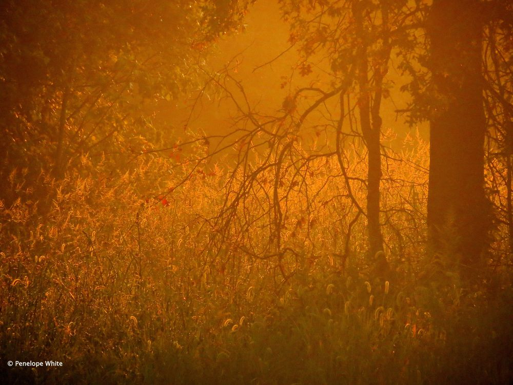 Photo in Landscape #landscape #sunrise #golden hour #trees #meadow