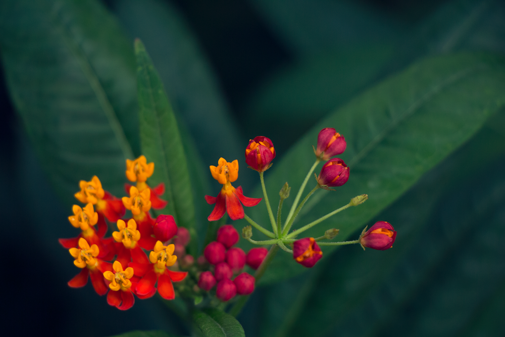 Photo in Nature #red #yellow #petals #flower #heads #closed #open #zoo