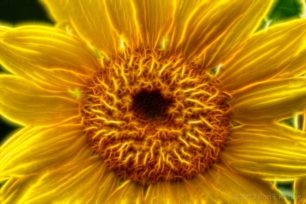 Photo in Random #sunflower