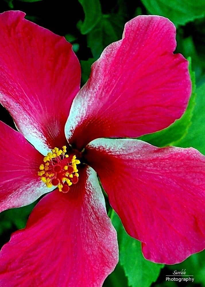 Photo in Nature #flower #macro