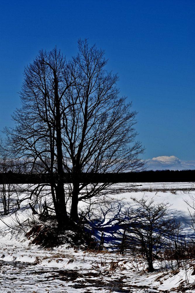 Photo in Random #spring #rural #tree