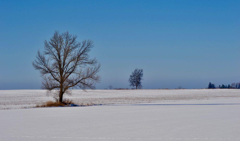 Photo in Random #winter #sunshine #tree #shadow #snow #rural