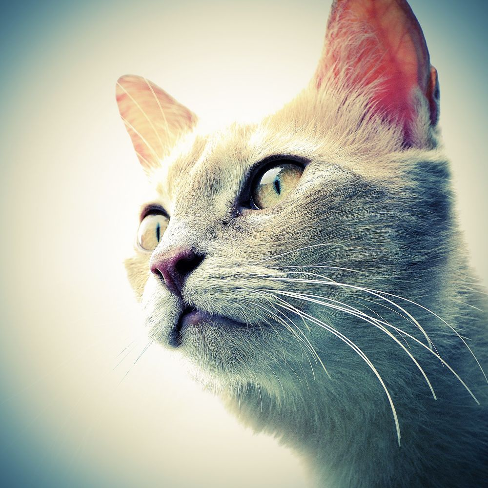 Photo in Animal #animal #cat #chat
