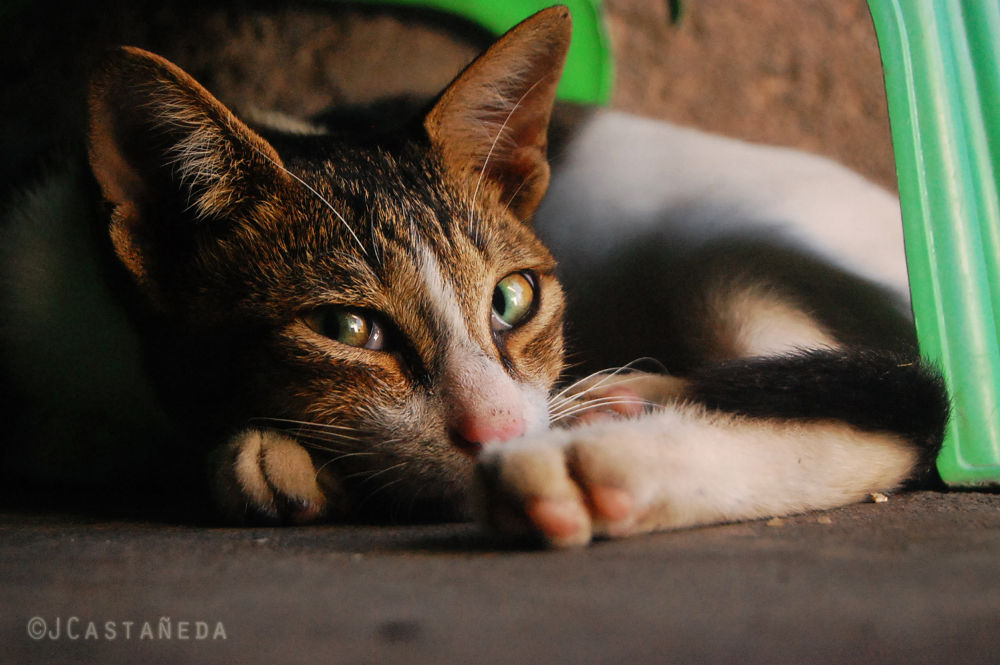 Photo in Animal #cat #kitten #mischief #curious #cute #yma2013