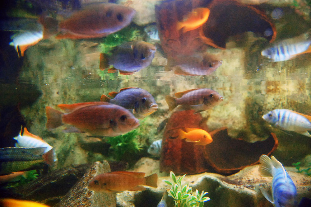 Photo in Underwater #fish #fishes #reflections #underwater #water #animals #cute #yma2013