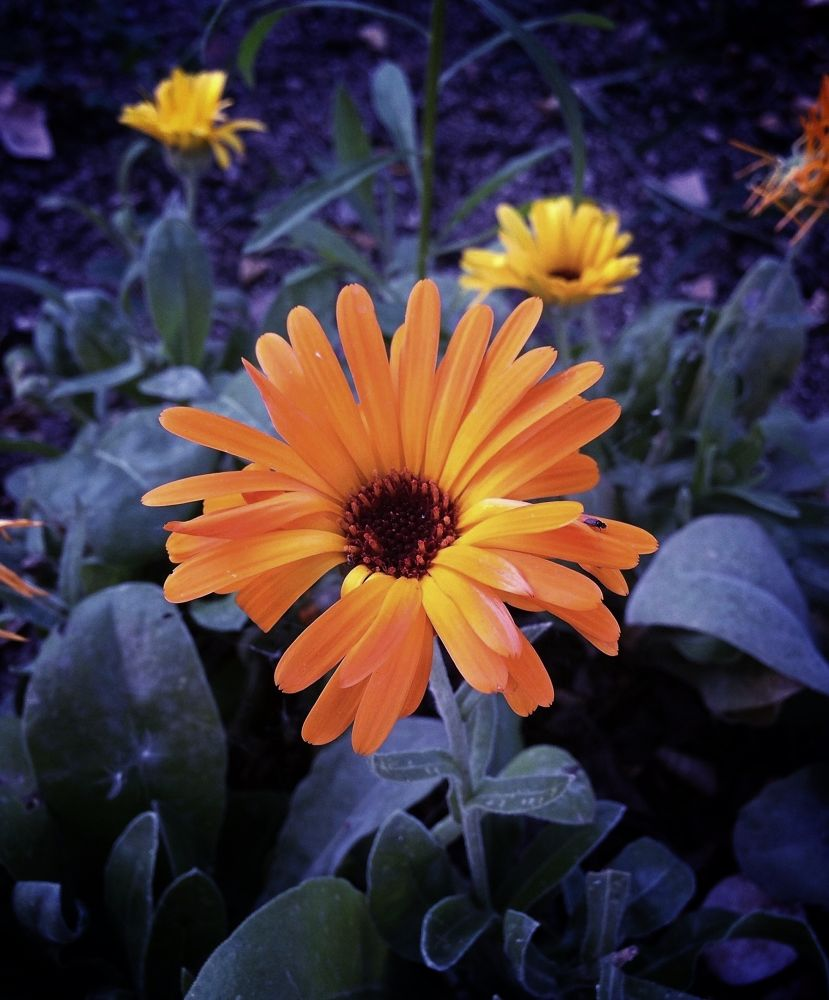 Photo in Random #flowerpetalnaturecolorful