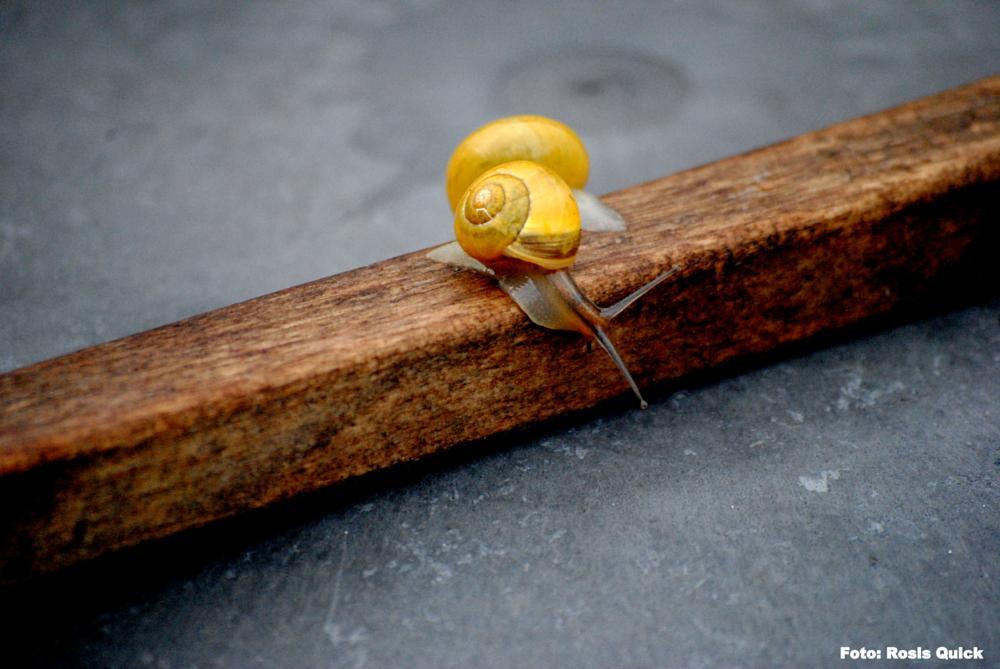 Photo in Nature #snails #garden #rain