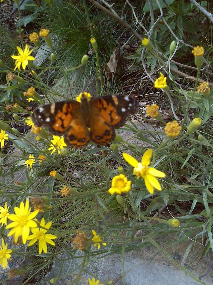 Photo in Nature #butterfly #woods #nature