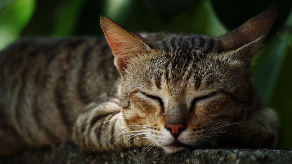Photo in Animal #cat #nature #sleep #pentax #animal #tired