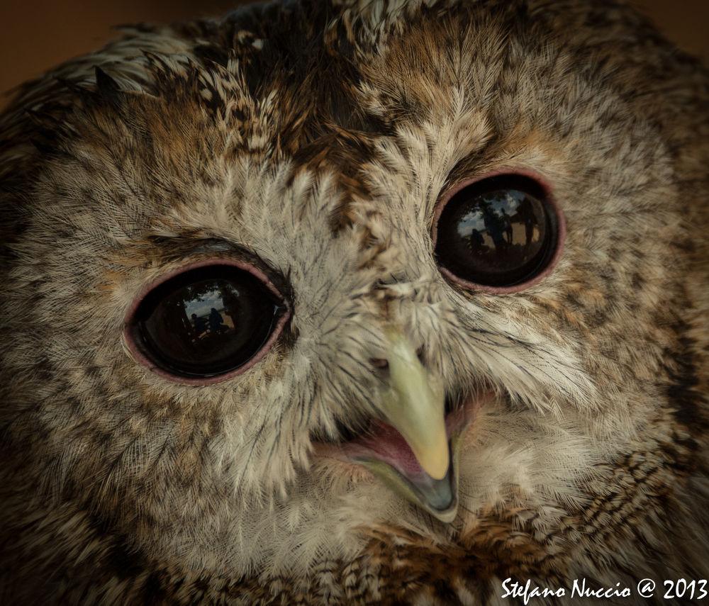 Photo in Animal #ypa2013 #owl #animals #dark #black #gufo #rapaci #raptor