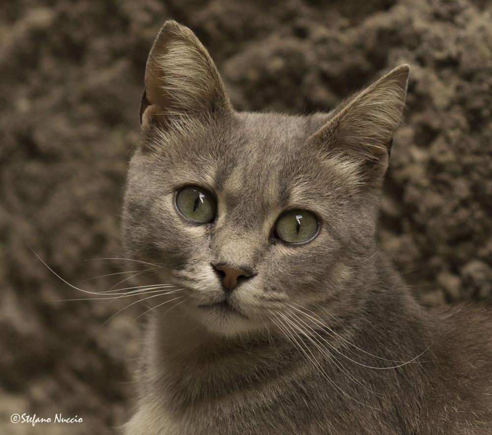 Photo in Animal #ypa2013 #animal #animali #cat #eyes #felino #gatto