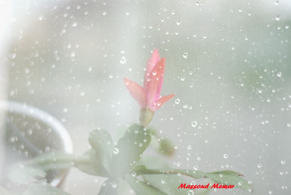 Photo in Nature #color. #red. #rain.