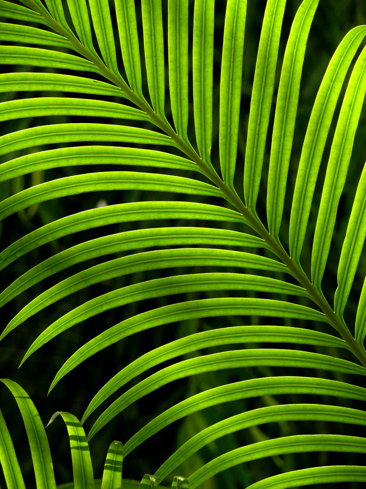 Photo in Nature #palm #leaf #green #nature #landscape