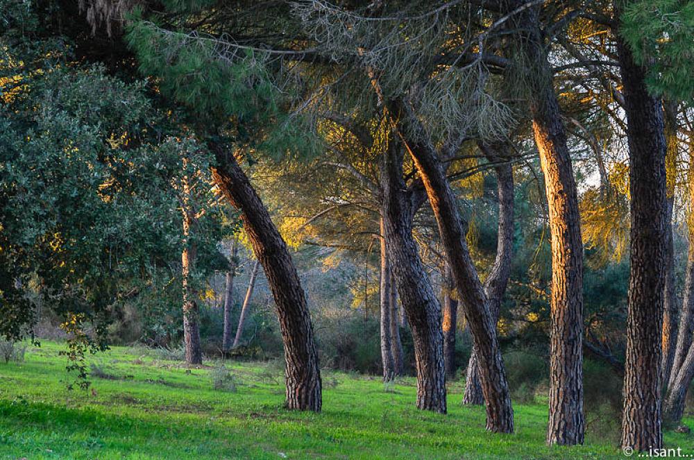 Photo in Landscape #doñana huelva andalusia spa #doñana huelva; andalucía esp
