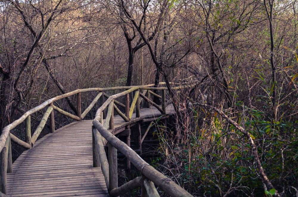 Photo in Landscape #doñana #naturaleza #parque #isant #pablo pazos #españa #huelva #almonte #puente