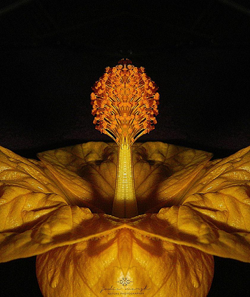Photo in Macro #macro #nature #flower #flora #yellow #flash