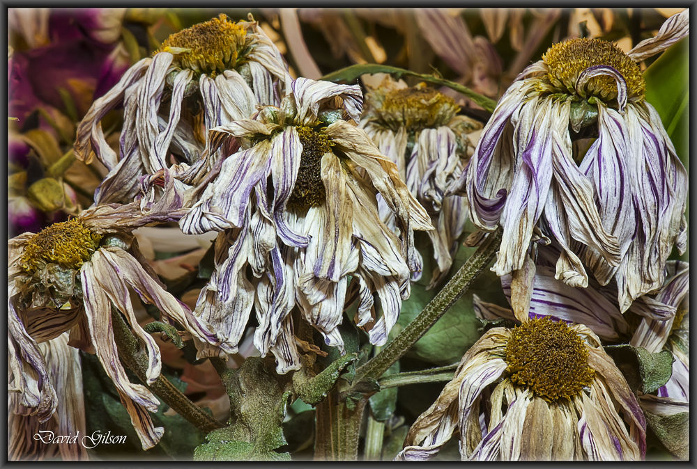 Photo in Nature #dehydration #nature #flower #dry #dried flowers #nikon #nikon d610 #nikkor d610
